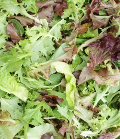 Hot Weather Lettuce Blend-Lettuce-Vegetables-Full Circle Seeds