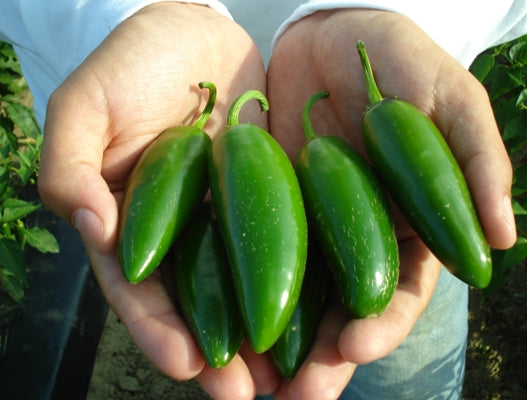 Jalapeno-Peppers-Vegetables-Full Circle Seeds