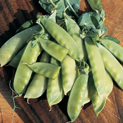 Jim's Oregon Giant - edible pod, pole-Peas-Vegetables-Full Circle Seeds