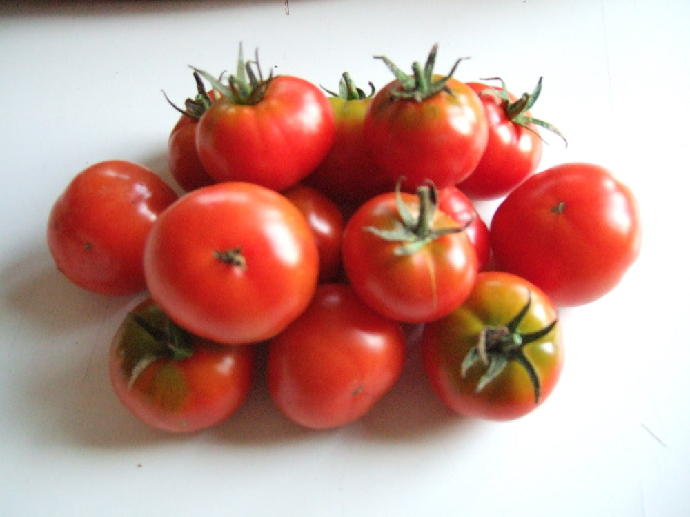 Latah-Tomatoes-Vegetables-Full Circle Seeds