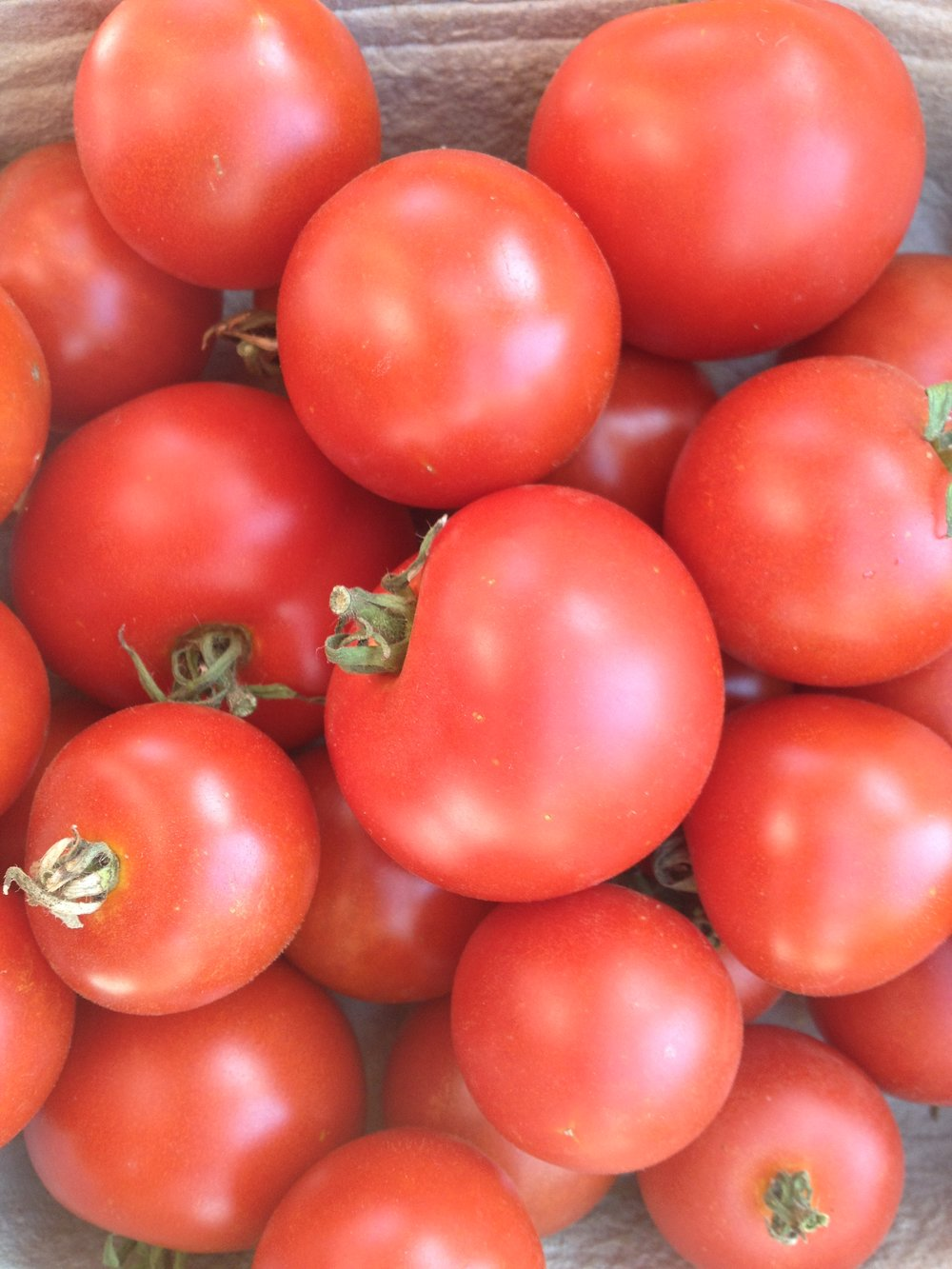 Matina-Tomatoes-Vegetables-Full Circle Seeds