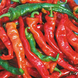Maule's Red Hot Chile-Peppers-Vegetables-Full Circle Seeds