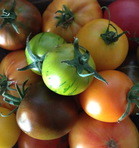 Mid-size Tomato Mix-Tomatoes-Vegetables-Full Circle Seeds