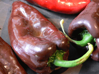Mulato-Peppers-Vegetables-Full Circle Seeds