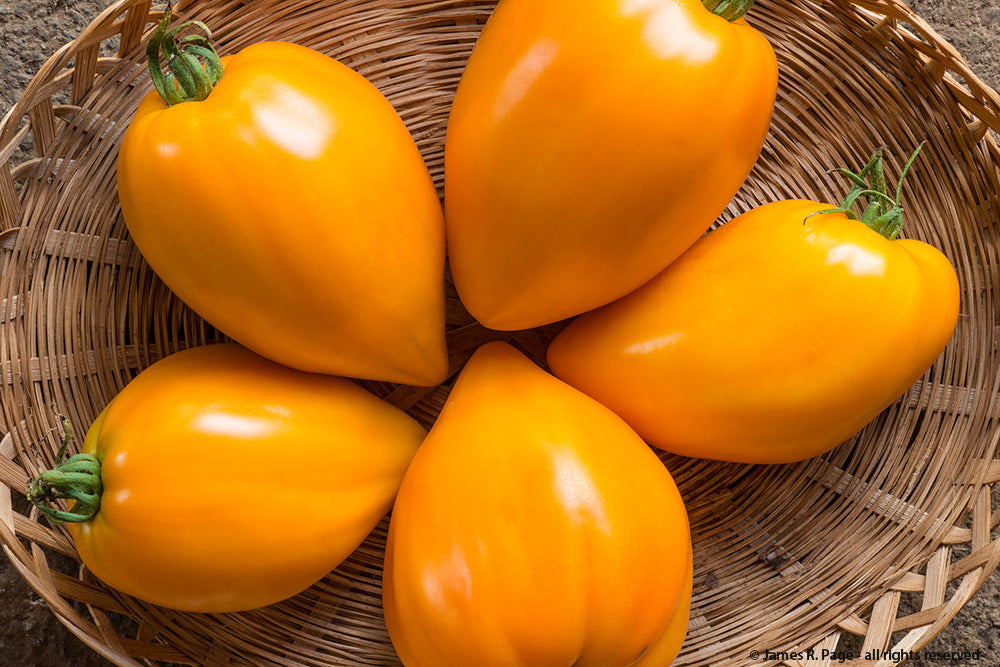 Orange Strawberry-Tomatoes-Vegetables-Full Circle Seeds