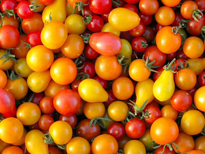 Patio Tomato Mix-Tomatoes-Vegetables-Full Circle Seeds