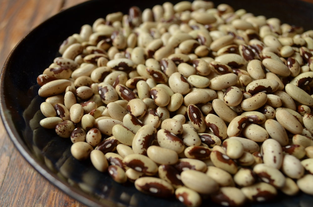 Pawnee-Beans-Vegetables-Full Circle Seeds