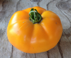 Persimmon-Tomatoes-Vegetables-Full Circle Seeds