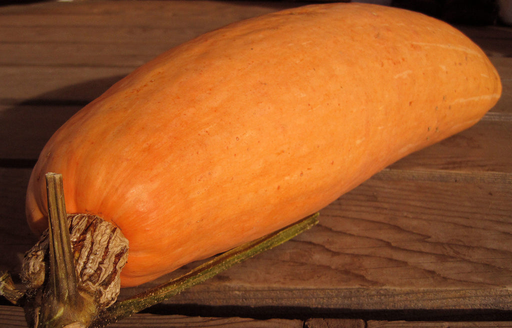 Pink Banana Squash-Winter Squash-Vegetables-Full Circle Seeds