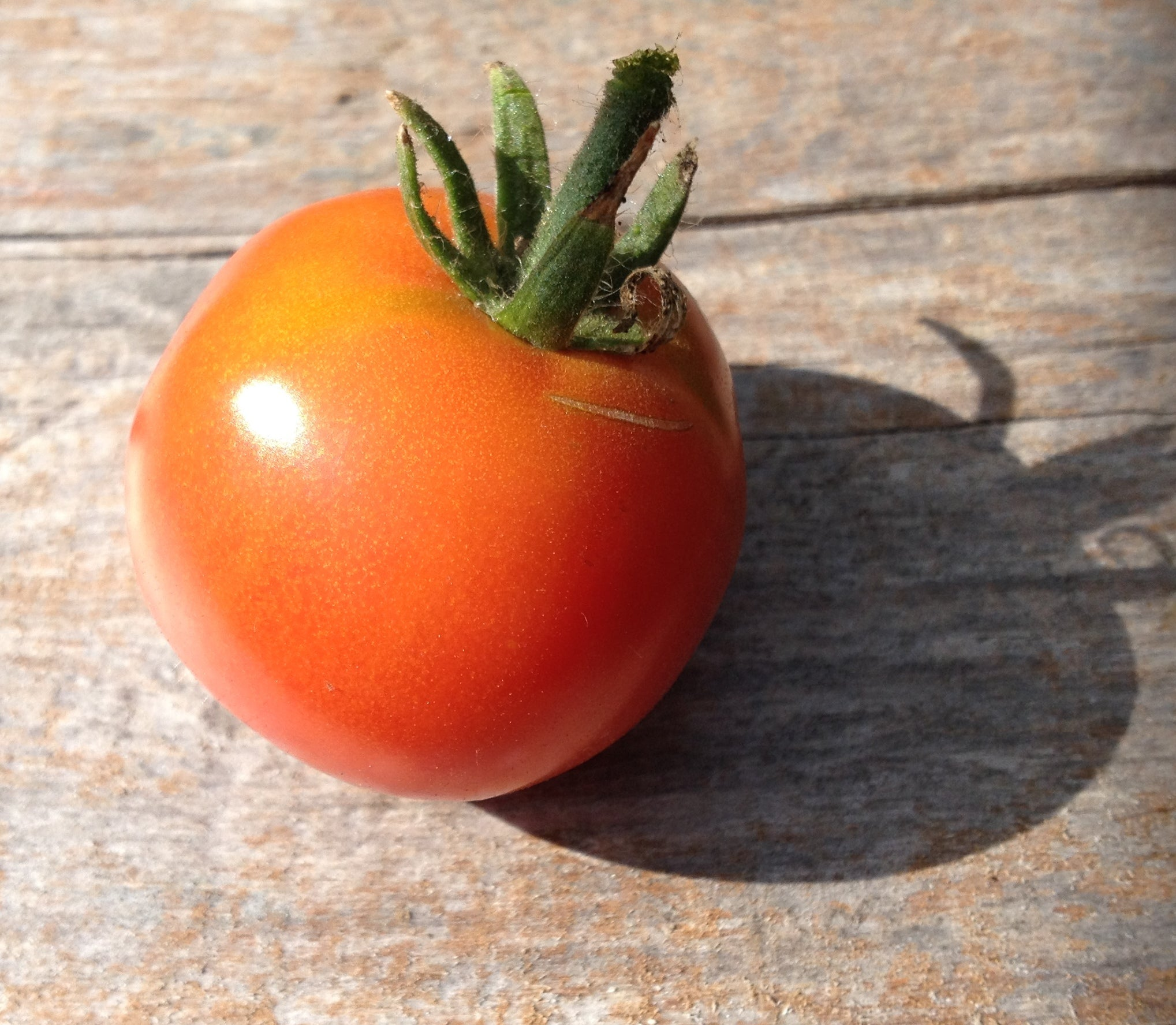Stupice-Tomatoes-Vegetables-Full Circle Seeds