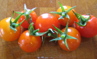Sweetie-Tomatoes-Vegetables-Full Circle Seeds