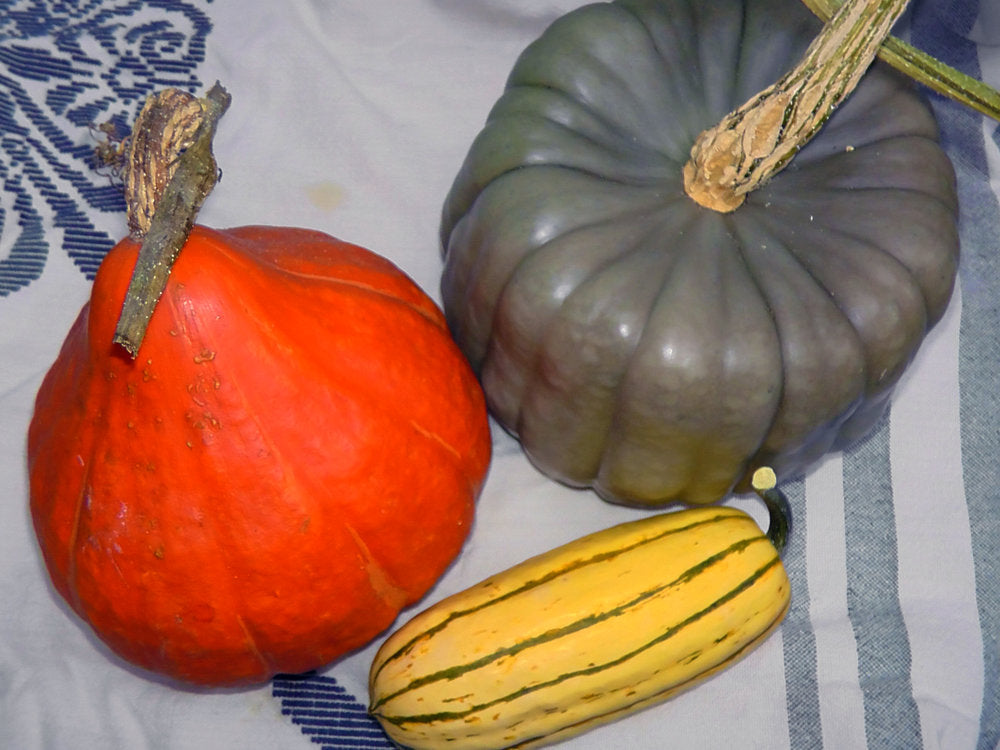 Trio of Winter Squash-Winter Squash-Vegetables-Full Circle Seeds