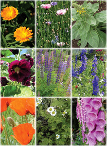 Wildflower Mix-Flowers-Flowers-Full Circle Seeds