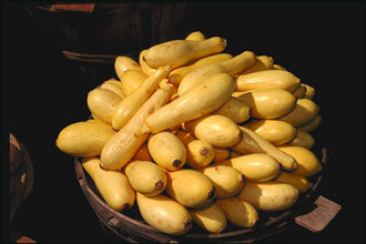 Yellow Crookneck Squash-Summer Squash-Vegetables-Full Circle Seeds
