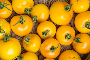 Yellow Perfection-Tomatoes-Vegetables-Full Circle Seeds