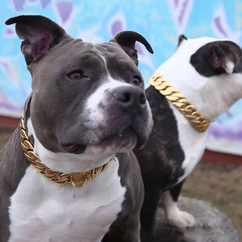 Pet Gold Chain