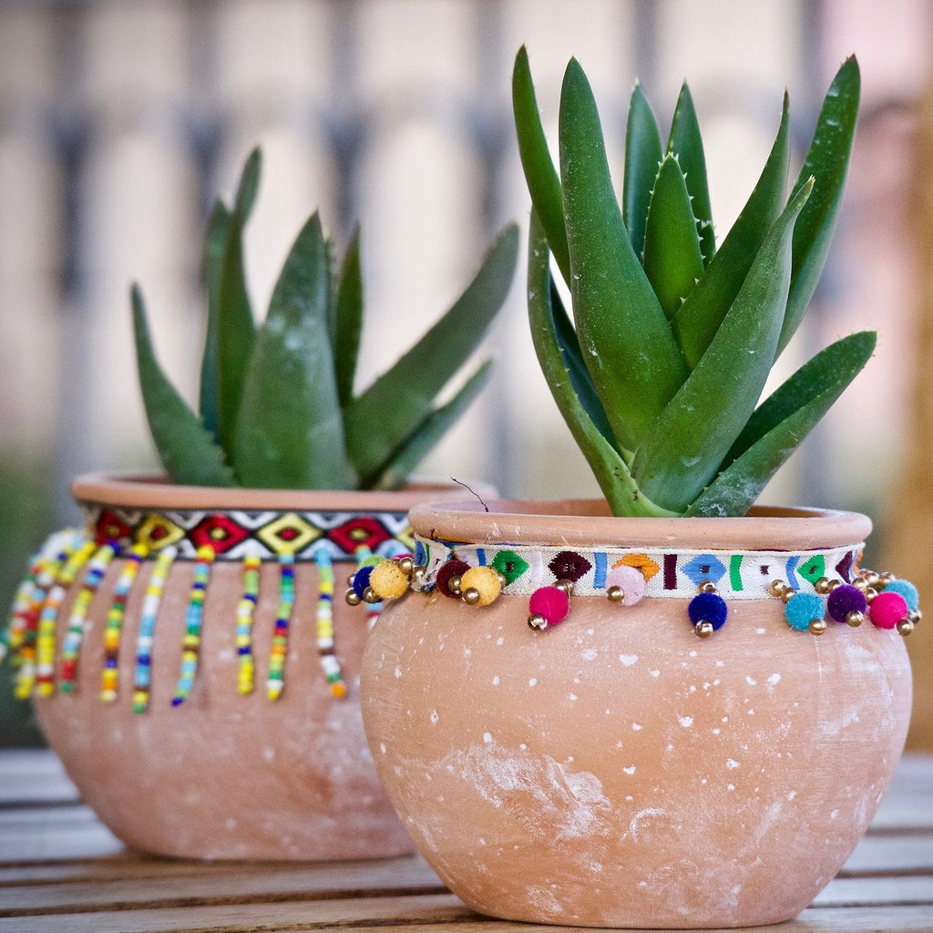 5 Reasons To Fill Your Home With Succulents