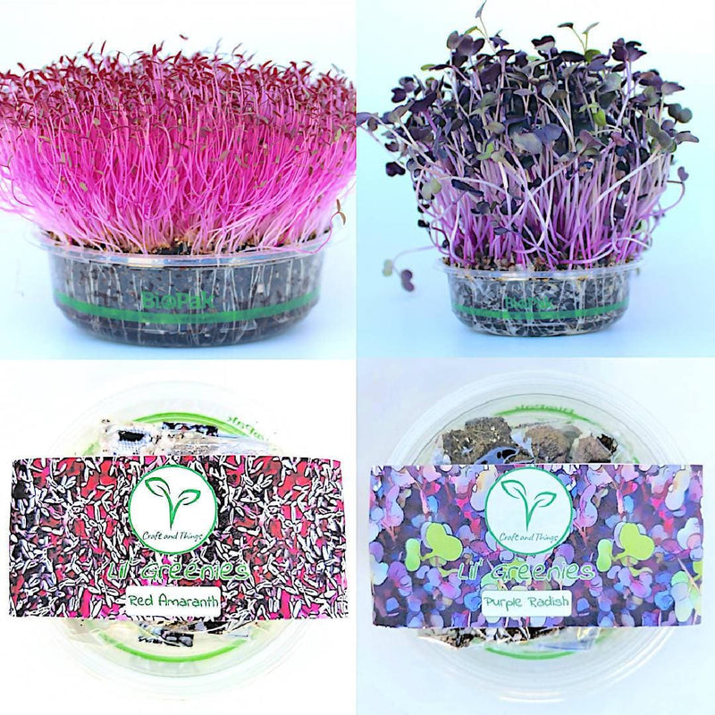 Grow Your Own Microgreens - Red Amaranth & Purple Radish DIY Kits