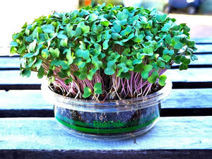 Grow Your Own Microgreens - Micro Broccoli & Red Amaranth DIY Kits