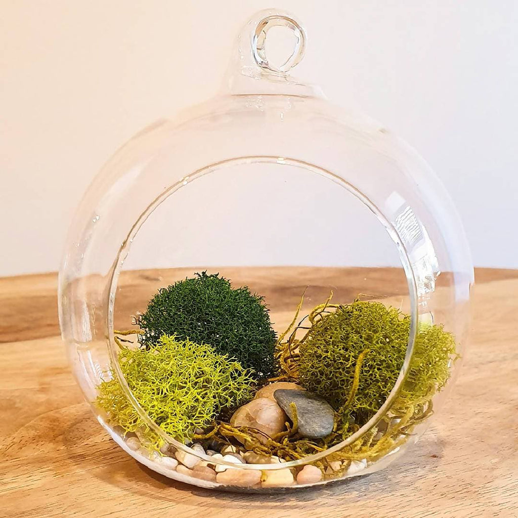 Hanging Terrarium DIY Kit - Harmony