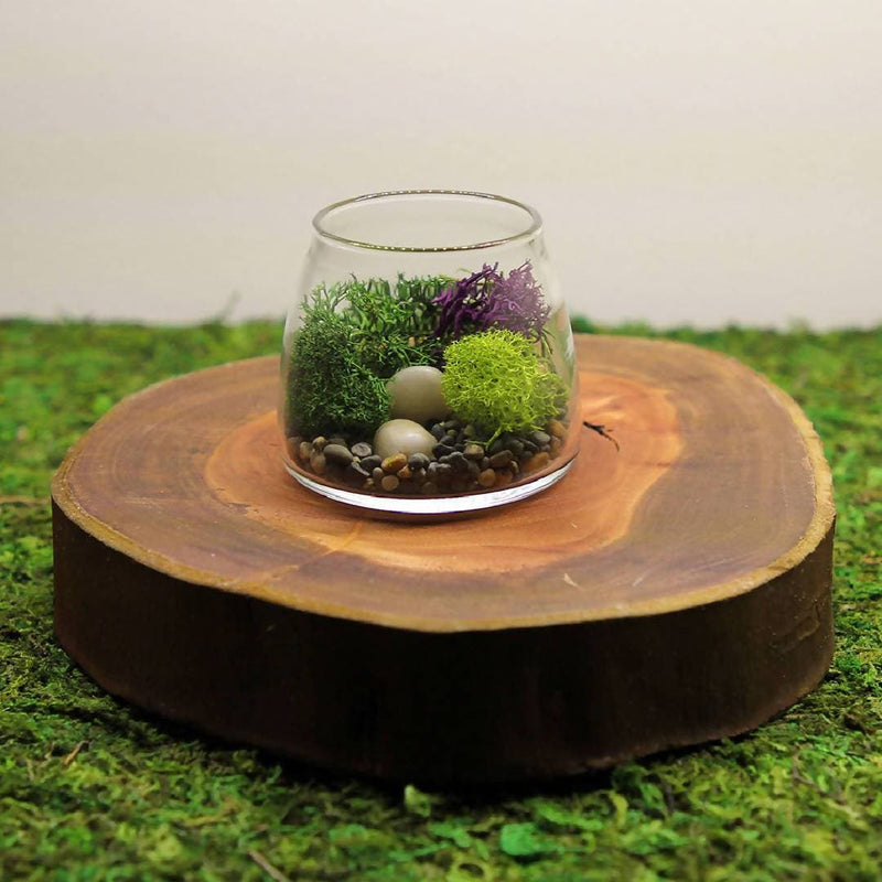Terrarium DIY Kit - Calm
