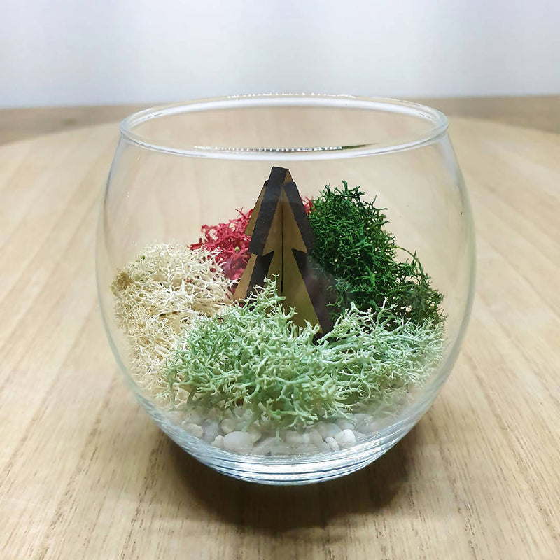 Christmas Terrarium DIY Kit - Cupid