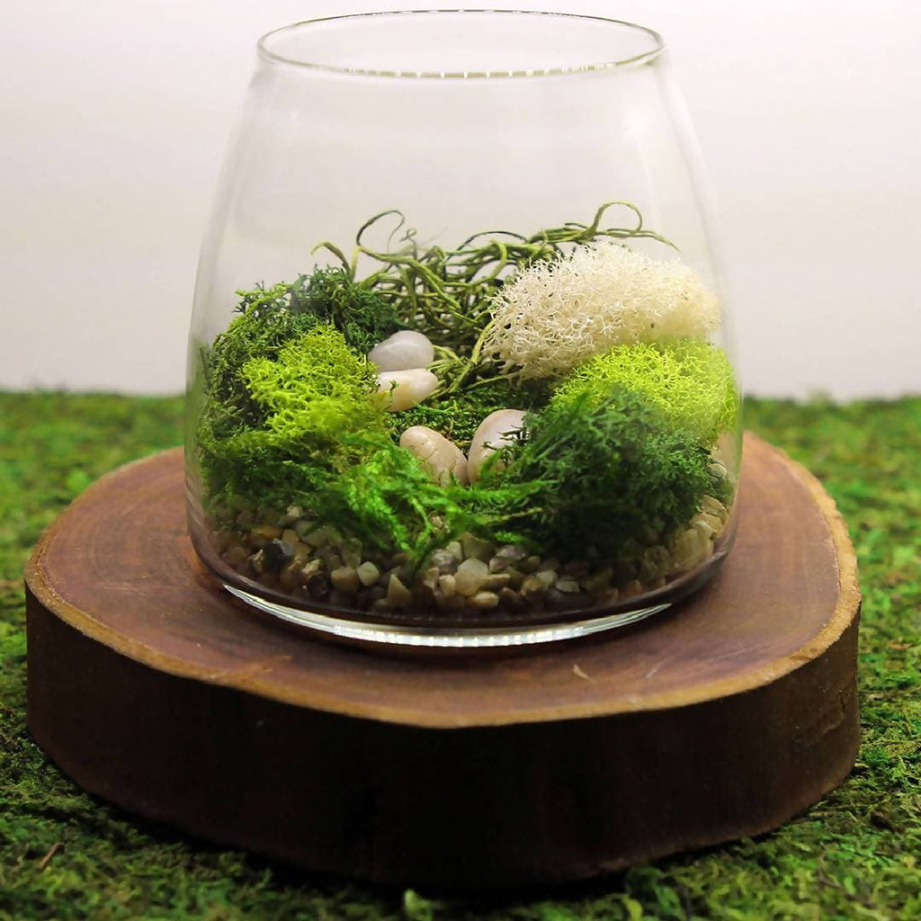 Terrarium DIY Kit - Gift pack