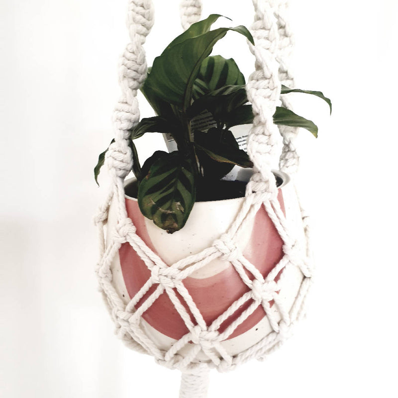 TWISTED Plant Hanger