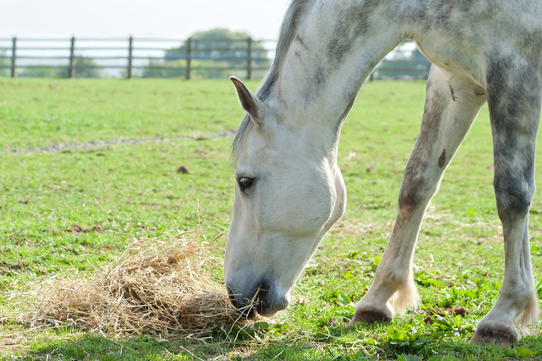Feeding Tips for Horses