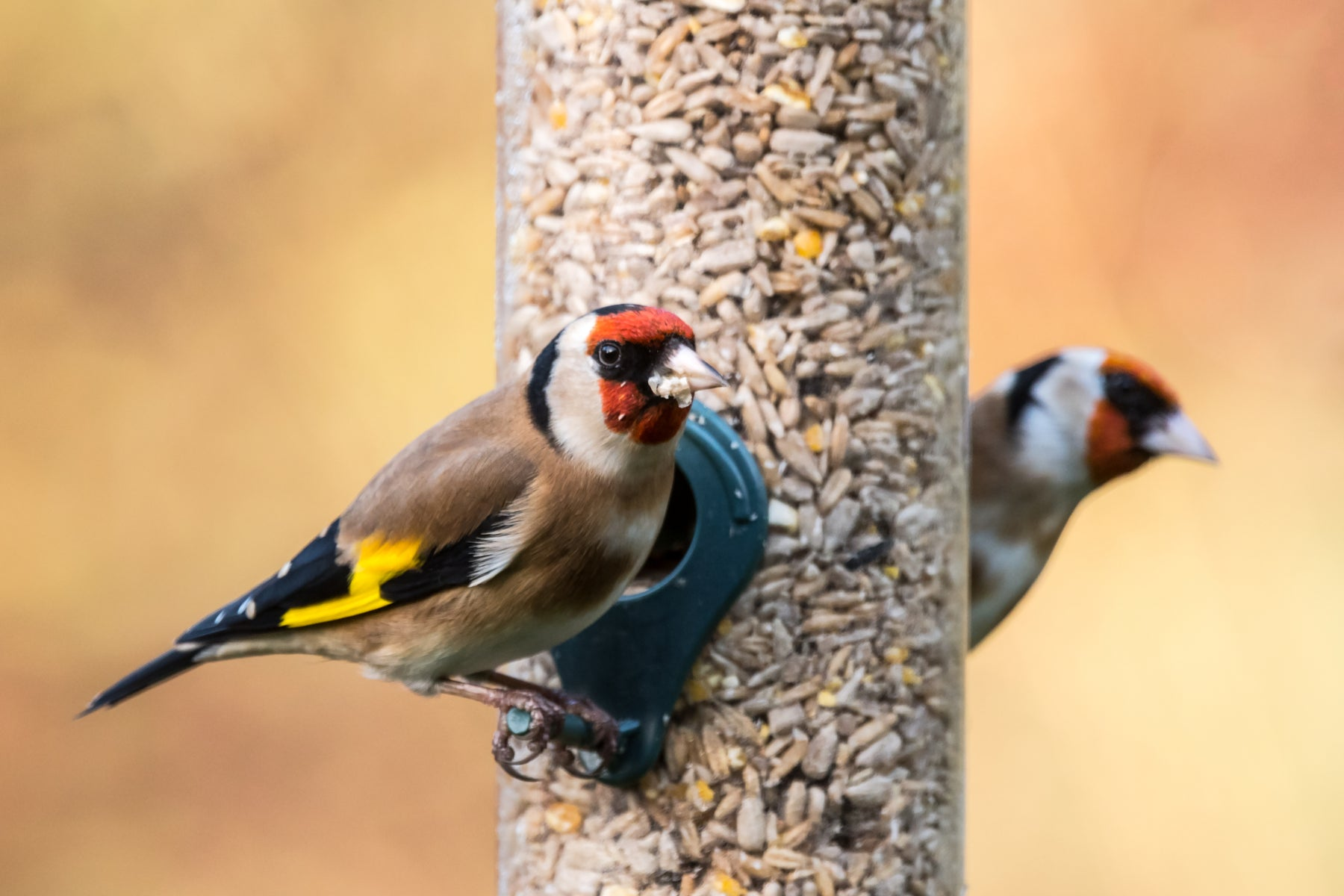 Wild Bird Feeder Hygiene - Top 5 Tips on how to keep your bird feeders clean and garden birds healthy.
