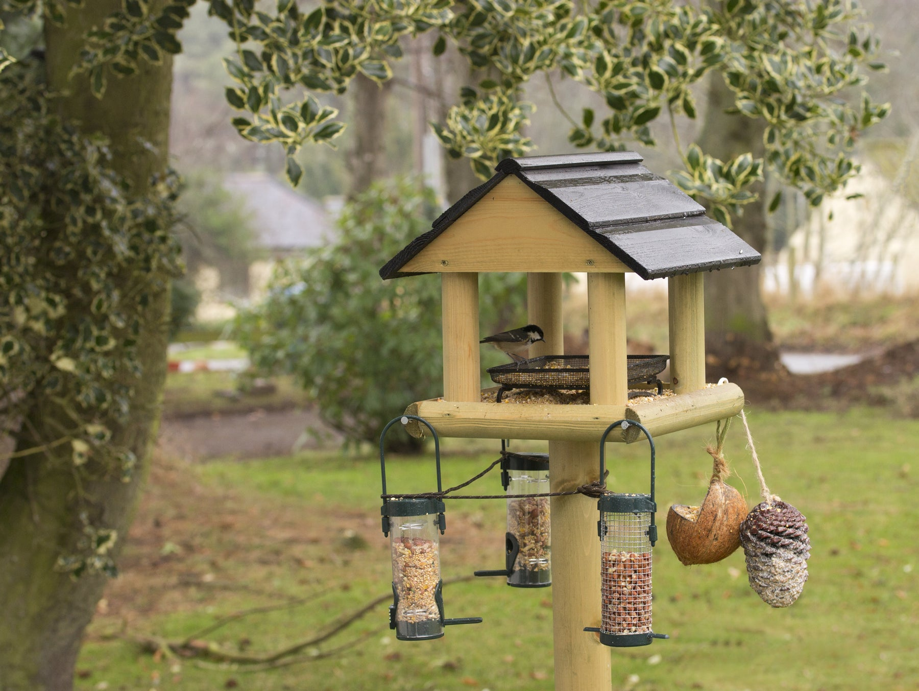 How To Attract Wild Birds to Your Garden.