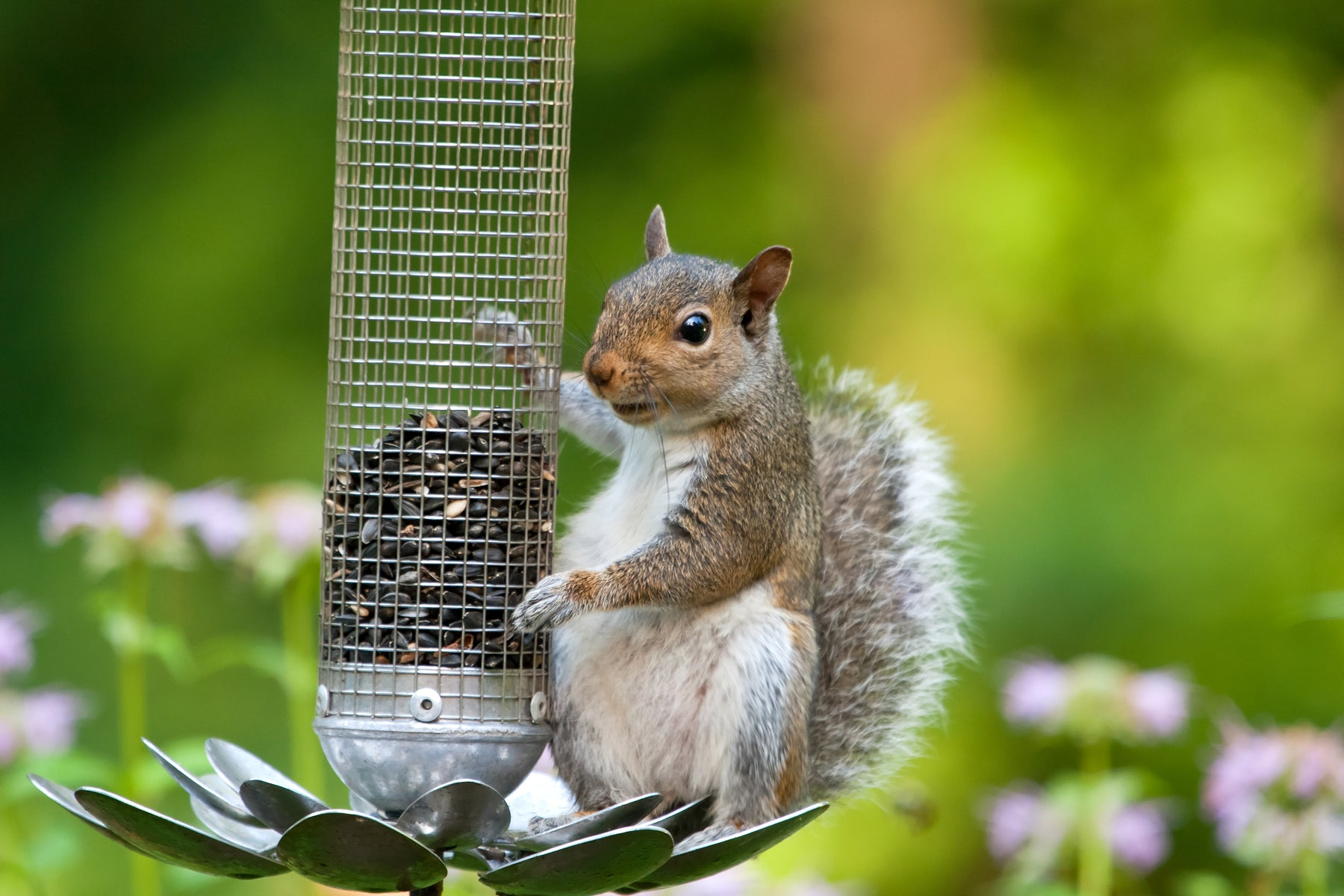 How to Stop Squirrels eating your Wild Bird Food