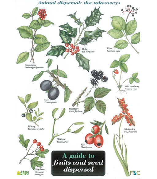 Field Guide - Fruits & Seed Dispursal