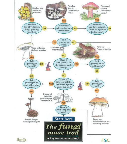 Field Guide - The Fungi Name Trail