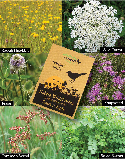 Native Wildflower Seeds for Garden Birds