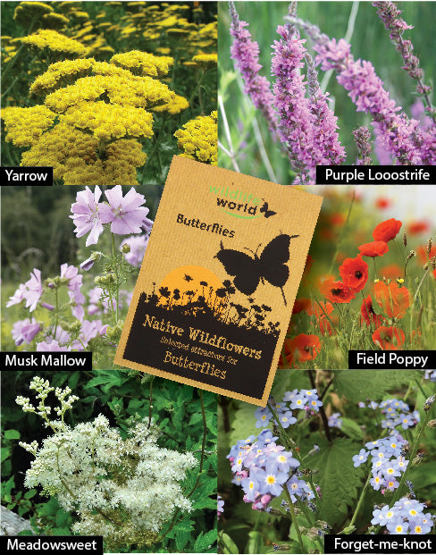 Native Wildflower Seeds for Butterflies