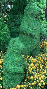 Topiary Bear standing