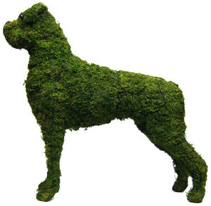 Topiary Dog Boxer