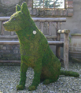 Topiary Dog German Shephard sitting