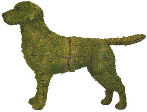 Topiary Dog Labrador Retriever
