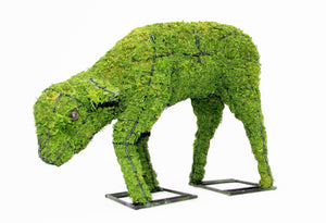 Topiary Lamb head down