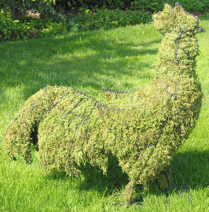 Topiary Rooster