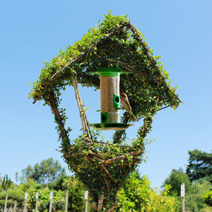 Bird Feeder / Topiary Bird Feeder Ligustrum : 18L : 150cm High (exc pot)