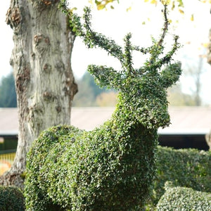 Topiary Stag - Living Plant Sculpture