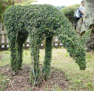 Topiary Deer - Living Plant Sculpture