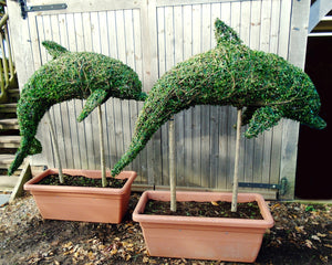 Topiary Dolphin on stem - Living Plant Sculpture