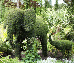 Topiary Elephant - Living Plant Sculpture