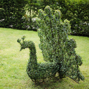 Topiary Peacock - Living Plant Sculpture
