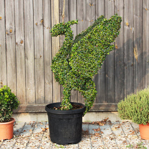 Liver Bird Topiary Sculpture