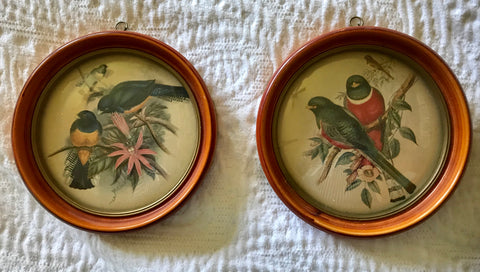 Vintage Pair Antique Round Framed Bird Audobon Prints Round Bubble Glass